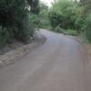 Strada nei boschi
