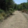Strada del bosco