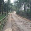 Strada carrabile nella pineta